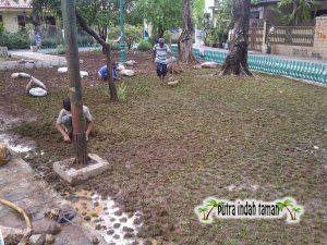 Harga Rumput Gajah Mini 2019